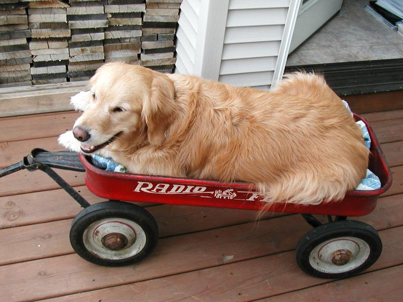 abby-in-wagon.jpg